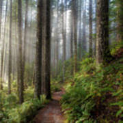 Sun Beams Along Hiking Trail In Washington State Park Poster