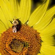 Sun Bee Poster