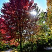 Sun Burst In Autumn Poster