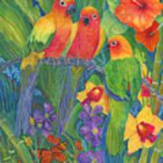 Sun Conure Parrots Poster