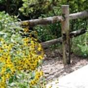 Sun Flower Fence Poster