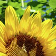 Sun Flower Floral Art Prints Sunflowers Summer Garden Poster