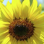 Sun Flower Glow Art Print Summer Sunflowers Baslee Troutman Poster