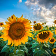 Sun Flower Glow Poster
