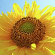 Sun Flowers Art Sunflower Giclee Prints Baslee Troutman  Poster