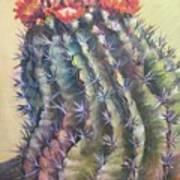 Sun Kissed Barrel Cactus Poster