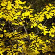 Sun-kissed Golden Leaves 2 Poster