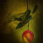 Sun-kissed Mango Poster