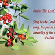 Sun Lite Pyrocanthia Berries Ps. 150 V 1 Poster