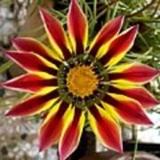 Sun Ray Flower Poster