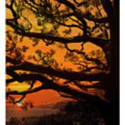 Sun Set At Rancho Palos Verdes, Cali Poster
