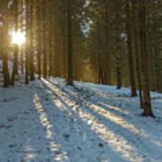 Sun Setting On Winter Woods Poster