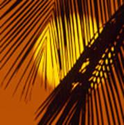Sun Shining Through Palms Poster