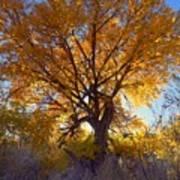 Sun Through Golden Leaves Poster