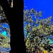 Sun Through Oak V3 Poster