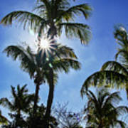 Sun Through Smathers Beach Palms Poster