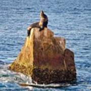 Sunbathing Sea Lion Poster