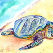 Sunbathing Turtle Poster