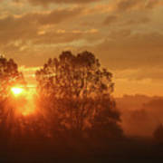 Sunbeam Through Cottonwoods Poster