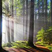 Sunbeams Along Hiking Trails Poster
