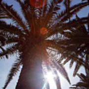 Sunbeams Through The Palms Poster