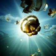 Sunburst Jelly Poster