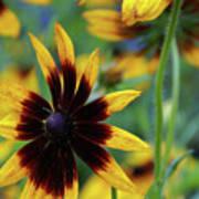Sunburst Petals Poster
