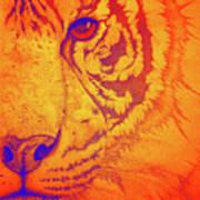 Sunburst Tiger Poster