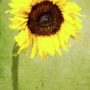 Sunflower 1 Poster