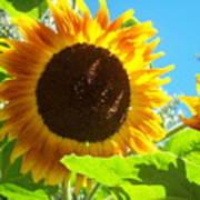 Sunflower 117 Poster
