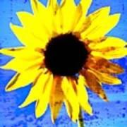 Sunflower 12 Poster