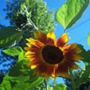 Sunflower 120 Poster