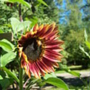 Sunflower 124 Poster