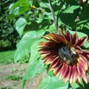 Sunflower 134 Poster