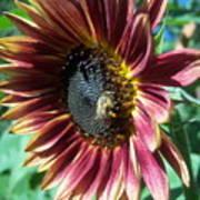 Sunflower 147 Poster