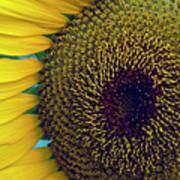 Sunflower-2 Poster