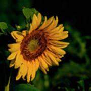 Sunflower 2017 11 Poster