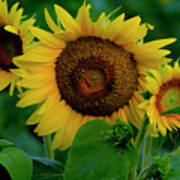 Sunflower 2017 9 Poster