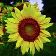 Sunflower After A Summer Rain Poster