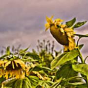 Sunflower Art 2 Poster