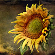 Sunflower Art 2 Poster