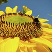 Sunflower Art Prints Honey Bee Sun Flower Floral Garden Poster