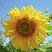 Sunflower Art Prints Sun Flower 2 Giclee Prints Baslee Troutman Poster