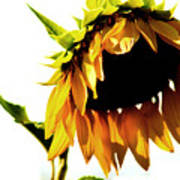 Sunflower Art Poster