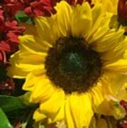 Sunflower Boquet Poster