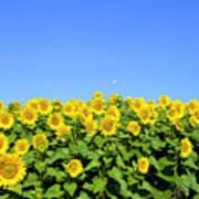 Sunflower City Poster
