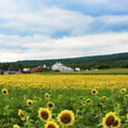 Sunflower Country Landscape  Poster