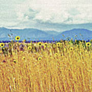 Sunflower Field 2 Poster