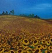 Sunflower Field 3 Poster