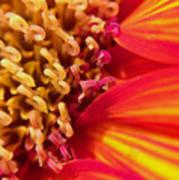Sunflower Fire 4 Poster